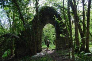 Ancient woodland and ruins in Dorset