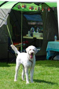 Drax at Stonewylde Moongazy Camp 2014